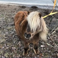 mini pony ipiccy_1554377729759.jpg.jpg