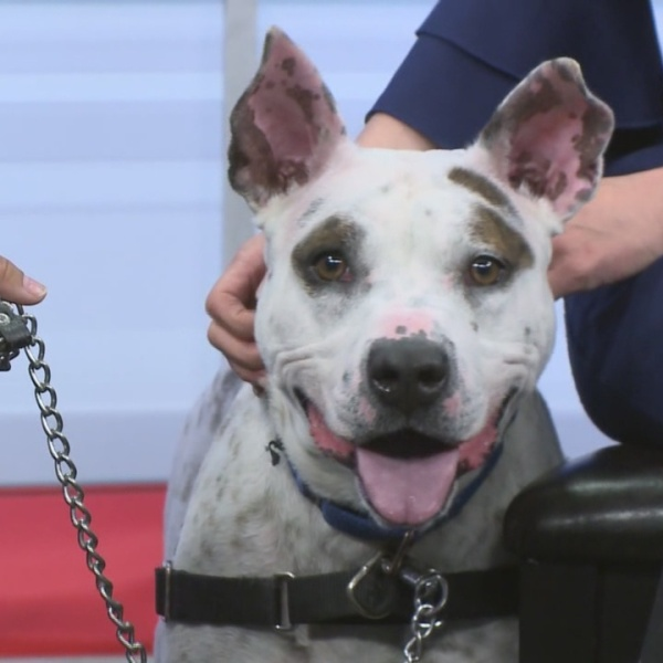 Rescue a Pet: Stormy