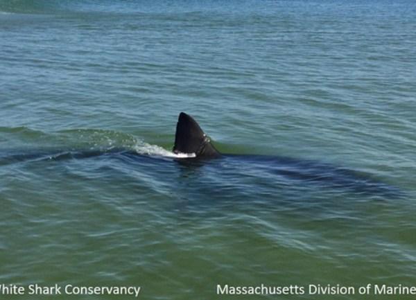 Shark_1559164044637.jpg