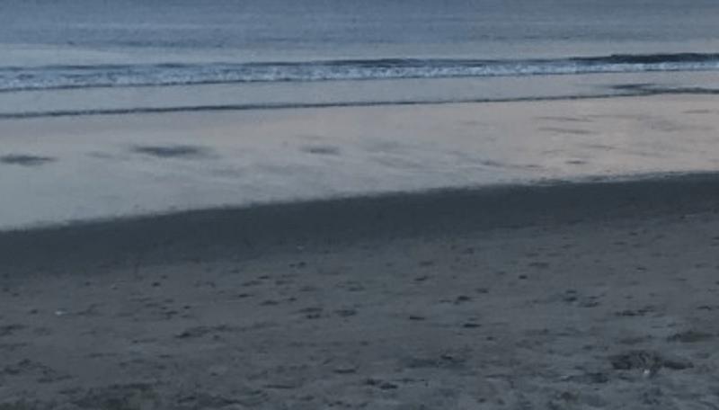 Fairhaven Halloween 2020 Fairhaven shark sighting prompts beach closures   WPRI.com