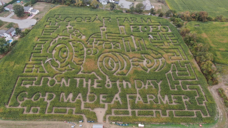 Escobar Farm Corn Maze with a salute to farmers