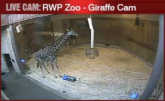 LIVE CAM: Roger Williams Park Zoo Giraffe Exhibit